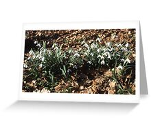 Snowdrops. Greeting Card