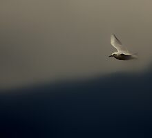 flying out of the fog by shrdn