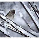 tweet .... by SNAPPYDAVE
