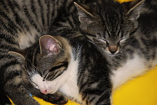 Two kittens asleep by Michael Brewer