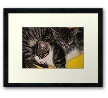 Two kittens asleep Framed Print