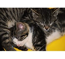 Two kittens asleep Photographic Print
