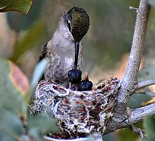 Hummingbirds Tiny Cycle of Life  by Judy Grant