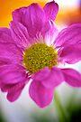 Bright Crysanthemum by Renee Hubbard Fine Art Photography