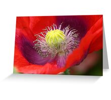 Red Poppy Macro Detail Greeting Card