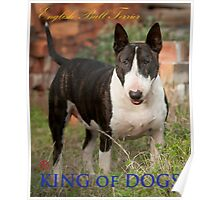 King of Dogs Poster