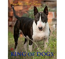 King of Dogs Photographic Print
