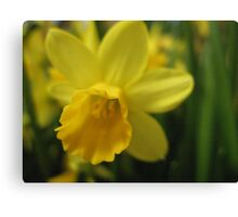 Daffy Daffodil Canvas Print