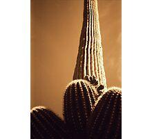 Saguaro-Tucson, AZ Photographic Print