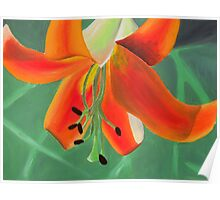 Painted Lilies Collection #8 Poster