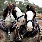 Clydesdale and Heavy Horse Festival 2010 by Kathryn Potempski