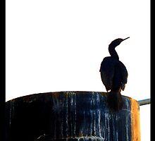 Bird Pipe by Arberndt
