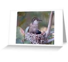 Hummingbirds Tiny Cycle of Life # 3 Greeting Card