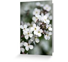 White Wildflowers Dames Rocket  Greeting Card