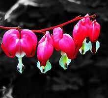 Dicentra - Bleeding Heart by jules572