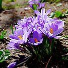 Spring Has Sprung by Pamela Hubbard