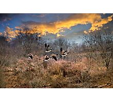 Sunset Geese Landscape Photographic Print