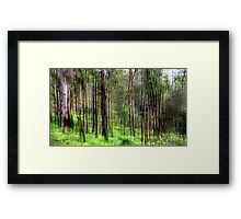 Rainforest Lines Framed Print