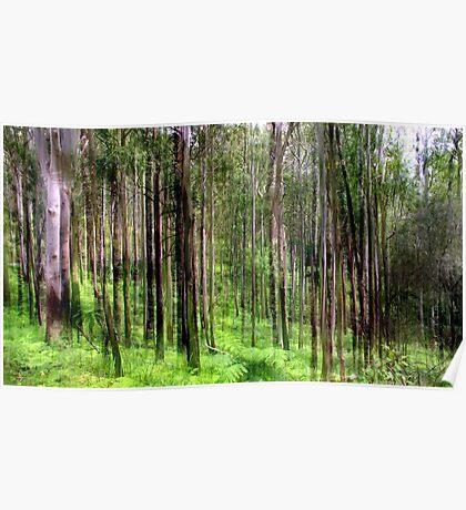 Rainforest Lines Poster