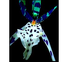 Ray Bans - A New Perspective on Orchid Life Photographic Print
