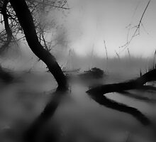 Hazy Reflections by Annie Muell