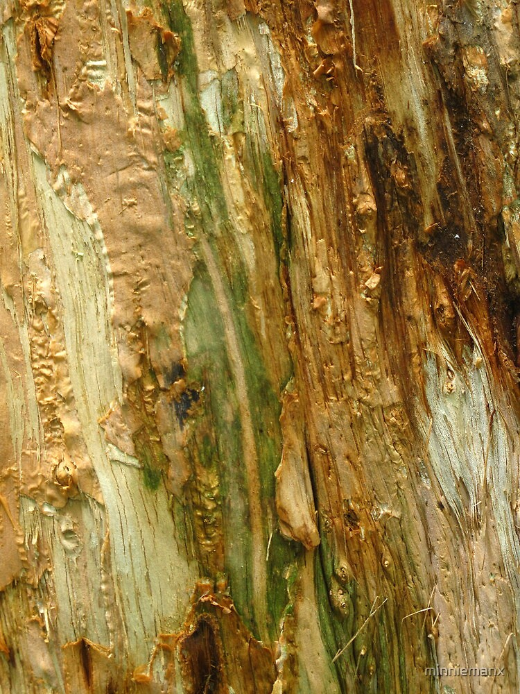 Paper Bark  by minniemanx