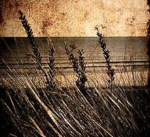 Marram in Grunge by Richard Hamilton-Veal