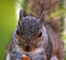 Squirrel in the Park by John Rocha