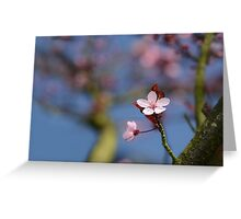 Moss and Blossoms Greeting Card