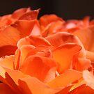 Tangerine Roses by Hege Nolan
