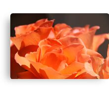 Tangerine Roses Metal Print