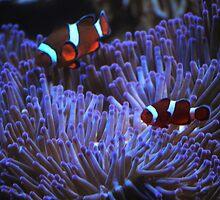 Pretty Fishes by Debbie Thatcher by Debbie Thatcher
