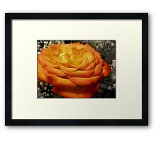 cuz red is overrated  Framed Print