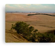 Barrabool Hills Farmlands Canvas Print