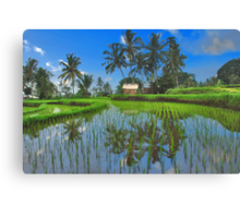 Reflections in the rice paddy Canvas Print