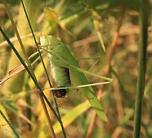 green insect with a green background by day1