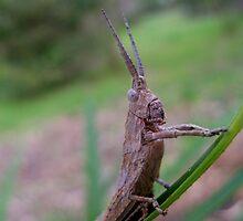 Grasshopper by John Marriott