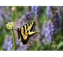 Butterfly Thoughts Photographic Print