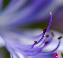 Purple Fantasy by T-Pot
