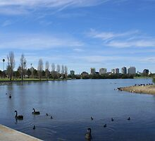 Albert Park Lake, Melbourne by BronReid