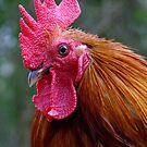 Grumpy The Rooster! by Gabrielle  Lees