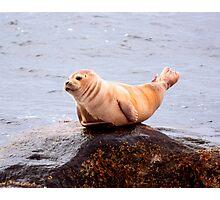 Seal Rock Photographic Print