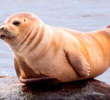 Seal Rock Sticker
