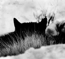 Cat-in Black and White by L J Fraser