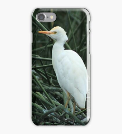 Young Egret in Reeds iPhone Case/Skin