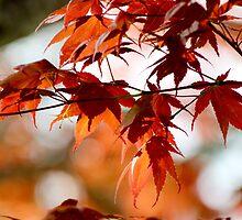 Spring Maple Orange by Gilda Axelrod