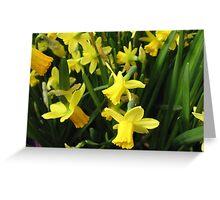 Daffodil Hope Greeting Card
