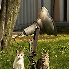 Two cats and a gramophone - Istanbul by Cammi