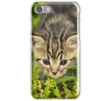 Baby Maine Coon iPhone Case/Skin