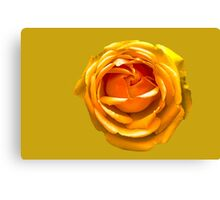 Peach Orange Rose Canvas Print